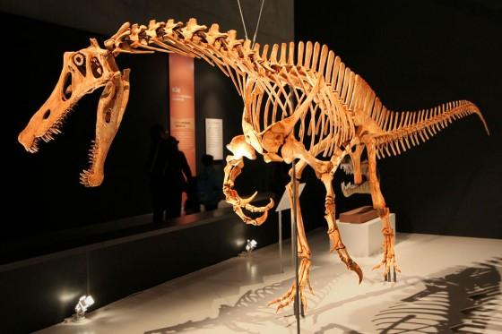 Spinosaur Skeleton