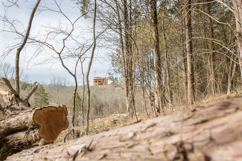 Ark Stern Above Logs