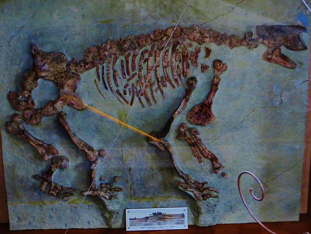 Macrotherium sansaniense Composite Skeleton
