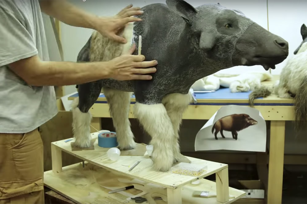 Applying Fur on Animal