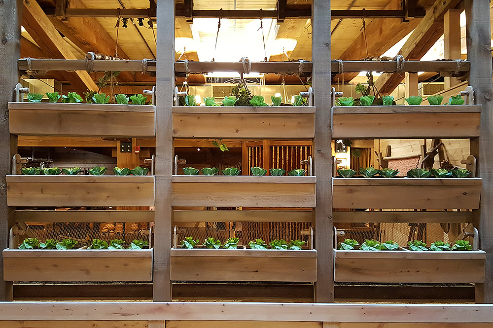 Growing Food on the Ark