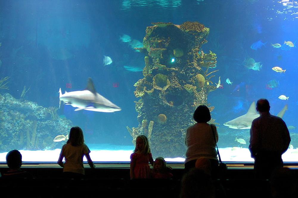 Sharks at Newport Aquarium