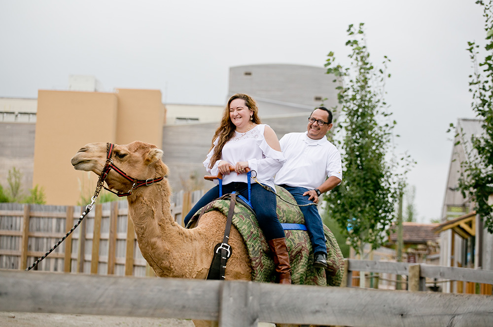 Family Camel Ride
