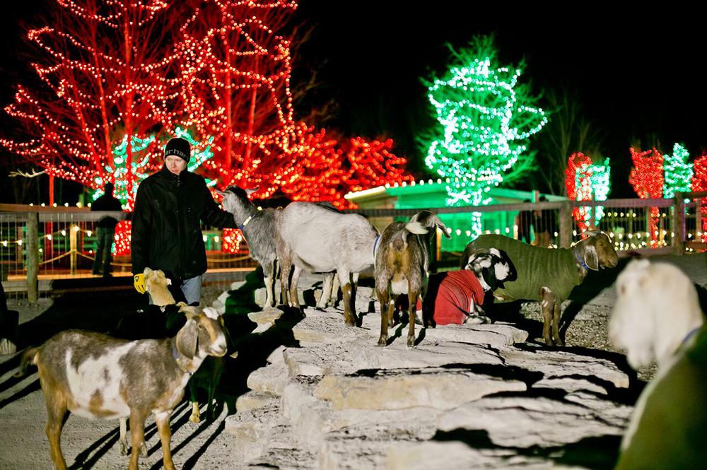 Ararat Ridge Zoo at Christmas