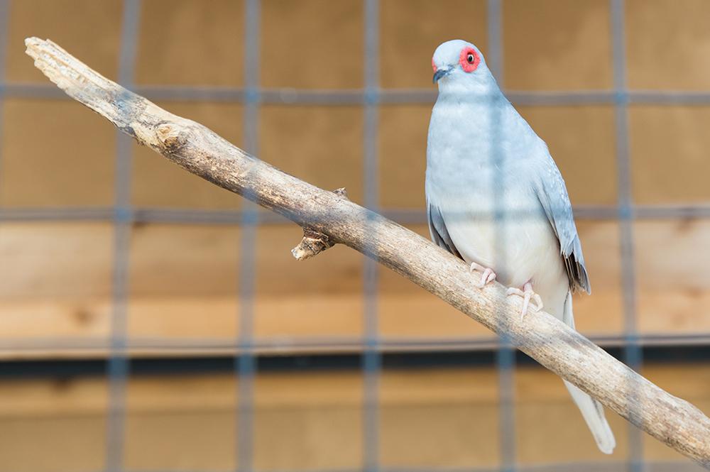 Live Animal Exhibit Bird