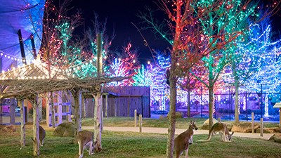 Upgrade Your ChristmasTime at the Ark Encounter Experience