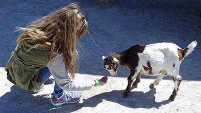 Meet Our Zoo Babies at the Ararat Ridge Zoo