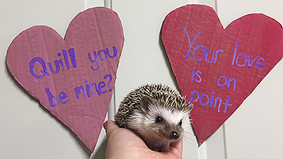 Celebrating Valentine's Day in the Ararat Ridge Zoo
