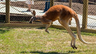 Fun Facts About Three Ararat Ridge Zoo Animals