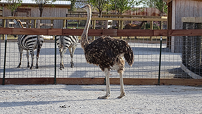 Learn More About Ararat Ridge Zoo Animals