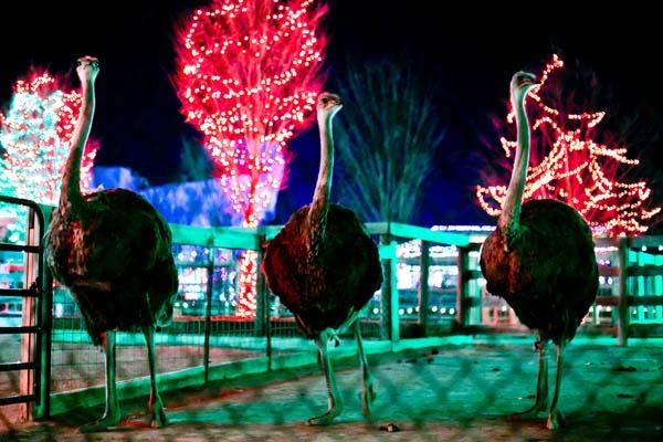 Winter Fun at the Zoo